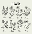 hand drawn sketch wildflowers set medical vector image