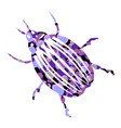bug icon on white vector image vector image