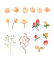 floral and leaves watercolor elements set hand vector image vector image