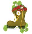 Strawberries old shoe vector image vector image