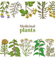colored template with medicinal plants in hand vector image