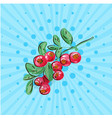 cranberries with leaves on a branch on a blue vector image vector image