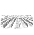 Hand Drawn Landscape with Fields vector image vector image