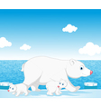 polar bear family vector image vector image