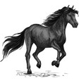 sketched stallion gallop or horse abling vector image