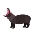 yawning hippopotamus isolated on white background vector image