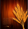 background with gold ears of wheat vector image