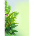 beauty tropical forest background vector image vector image
