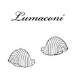 lumaconi pasta authentic italian pasta hand drawn vector image