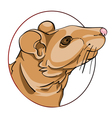 rat sign vector image vector image