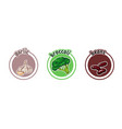 three stickers with different vegetables garlic vector image vector image