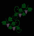 a vine with bunches of grapes embroidery of jeans vector image