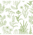 light pattern with medicinal plants in hand-drawn vector image vector image