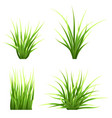 set realictic grass vector image