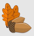 acorn with leaves isolated on a white background vector image