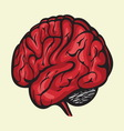 brain3 resize vector image vector image