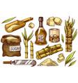 cane sugar with leaves set sugarcane plants vector image vector image