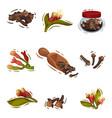 clove plant botanical cooking