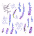 collection field purple flowers for design vector image vector image