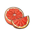 half and quarter of ripe pink grapefruit hand vector image vector image