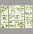 olive oil banner organic oils labels green vector image