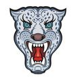 Snow Leopard vector image vector image