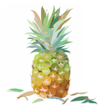 Watercolor Pineapple isolated vector image vector image