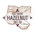 100 percent organic hazelnut in shell and cracked vector image