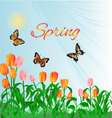 Spring blossoms tulips and butterflies vector image vector image