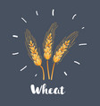 wheat on dark background vector image vector image