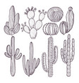 wild cactuses hand drawn vector image