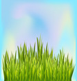 fresh green grass border with blue sky background vector image