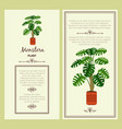 greeting card with monstera plant vector image