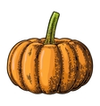 Pumpkin color vintage engraving vector image