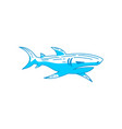 shark dangerous logo design isolated template vector image vector image