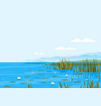 bulrush plants with water lily landscape vector image