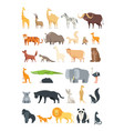 flat african jungle and forest animals cute vector image vector image
