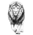 lion sketchy graphical portrait vector image vector image