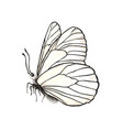 realistic butterfly isolated on white background vector image vector image