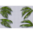 tropical dark green palm leaves with a shadow are vector image