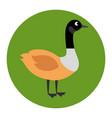 canadian duck scene icon vector image vector image