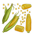 farm different sides of corn vector image