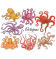 hand drawn designed various colors octopuses vector image
