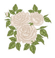hand drawn white roses flowers and leaves vintage vector image