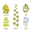 legumes plants with leaves pods and flowers vector image vector image