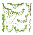 liana or jungle plant greenery winding branches vector image