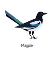 magpie isolated on white background intelligent vector image vector image