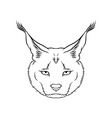 sketch of caracals head portrait of steppe lynx vector image