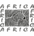 background with a zebra motif with text africa vector image vector image
