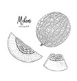 hand drawn of melon isolated on white vector image vector image